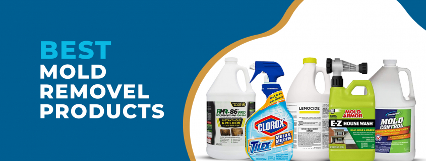 Best Mold Removal Products